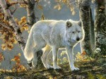 Jewish Wolf